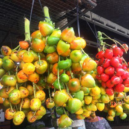 pupunha fruta amazonia