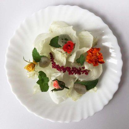 vitoria regia flores