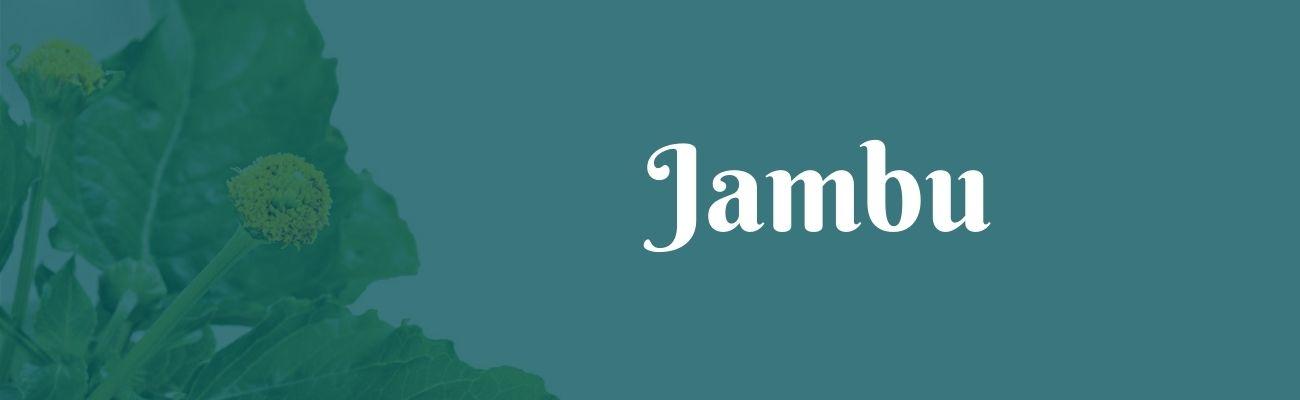 jambu o que é